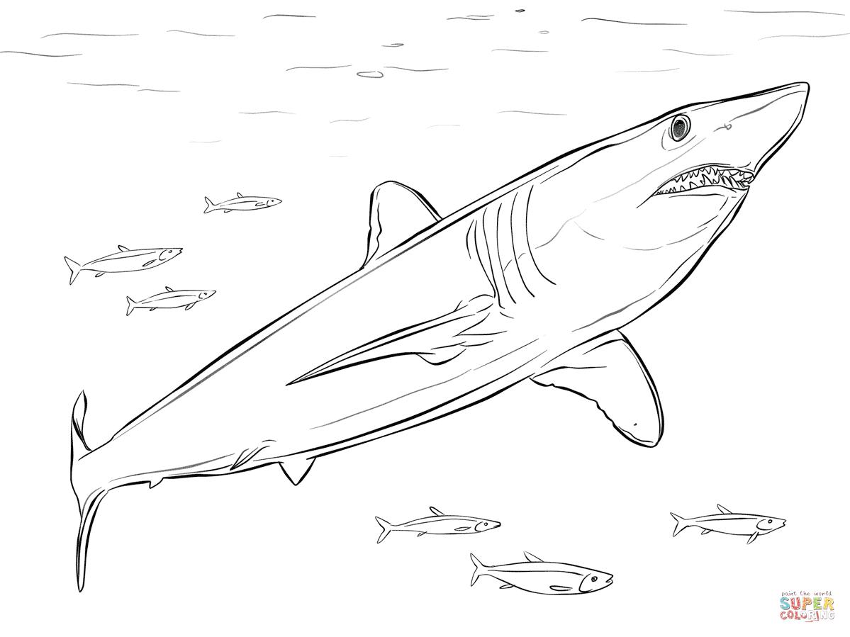 requin taupe bleu maquereau grand requin blanc requin dans la mer