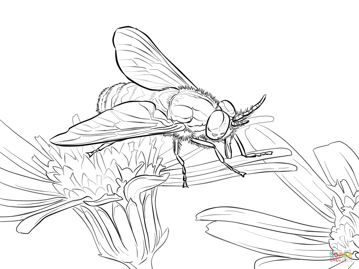 Twin Lobed Deerfly Coloring Page