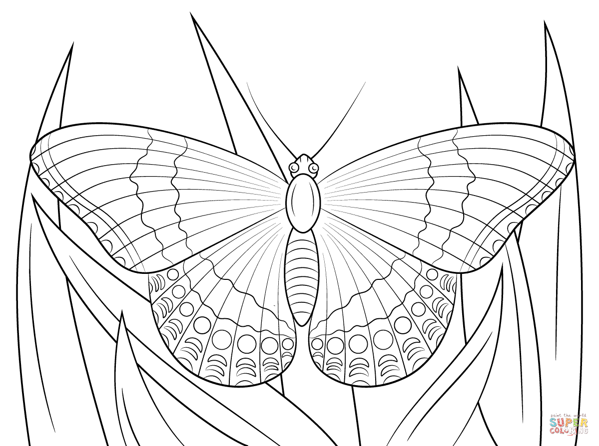 Ulysses Butterfly Rainbow