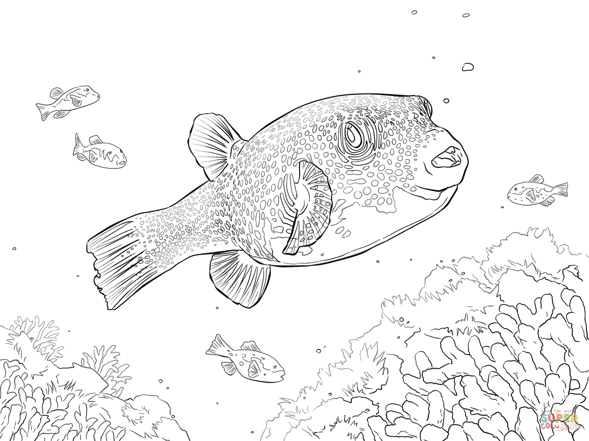 White Spotted Puffer Coloring Page Free Printable Coloring Pages