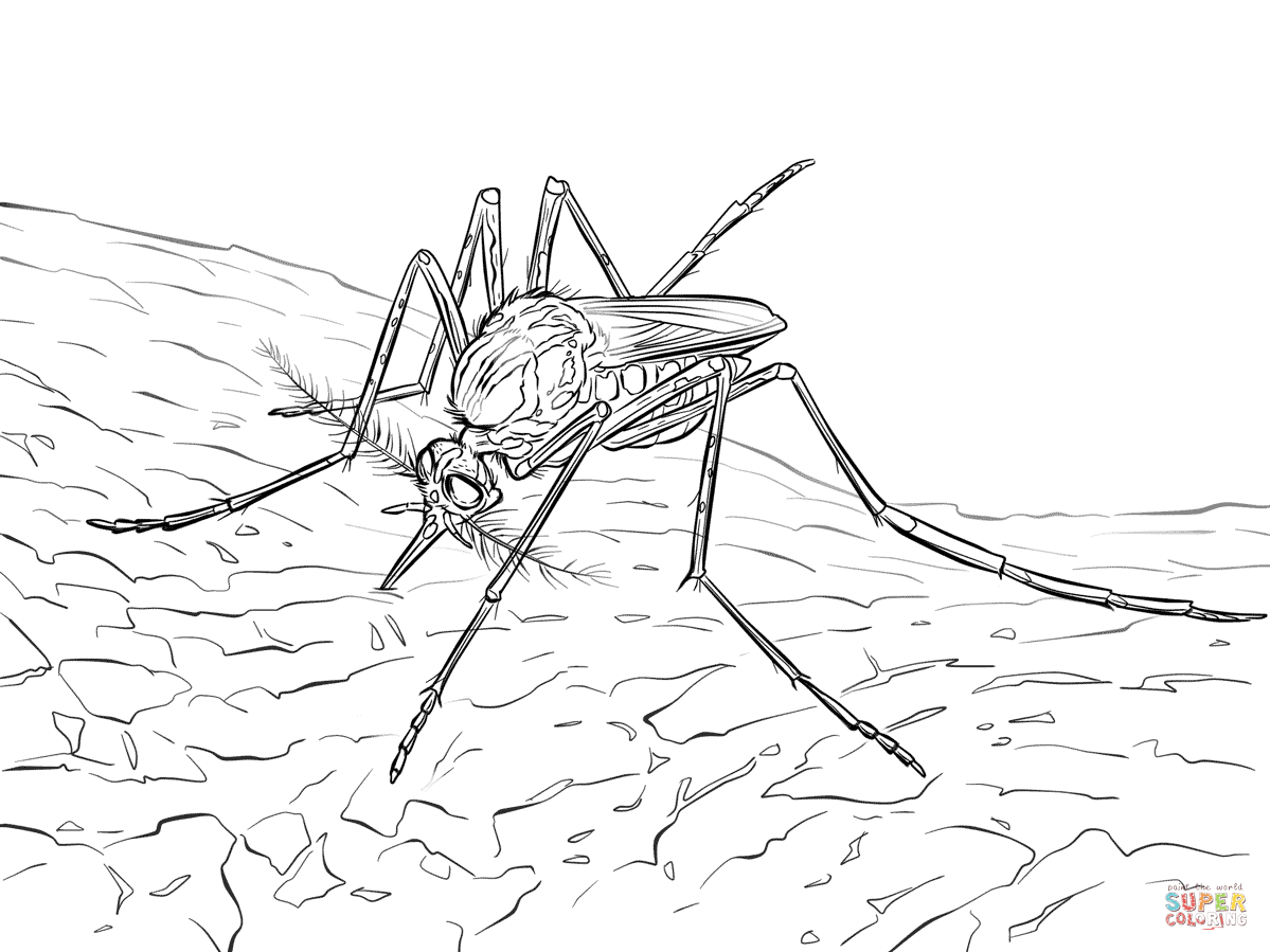 Yellow Fever Mosquito Coloring Page