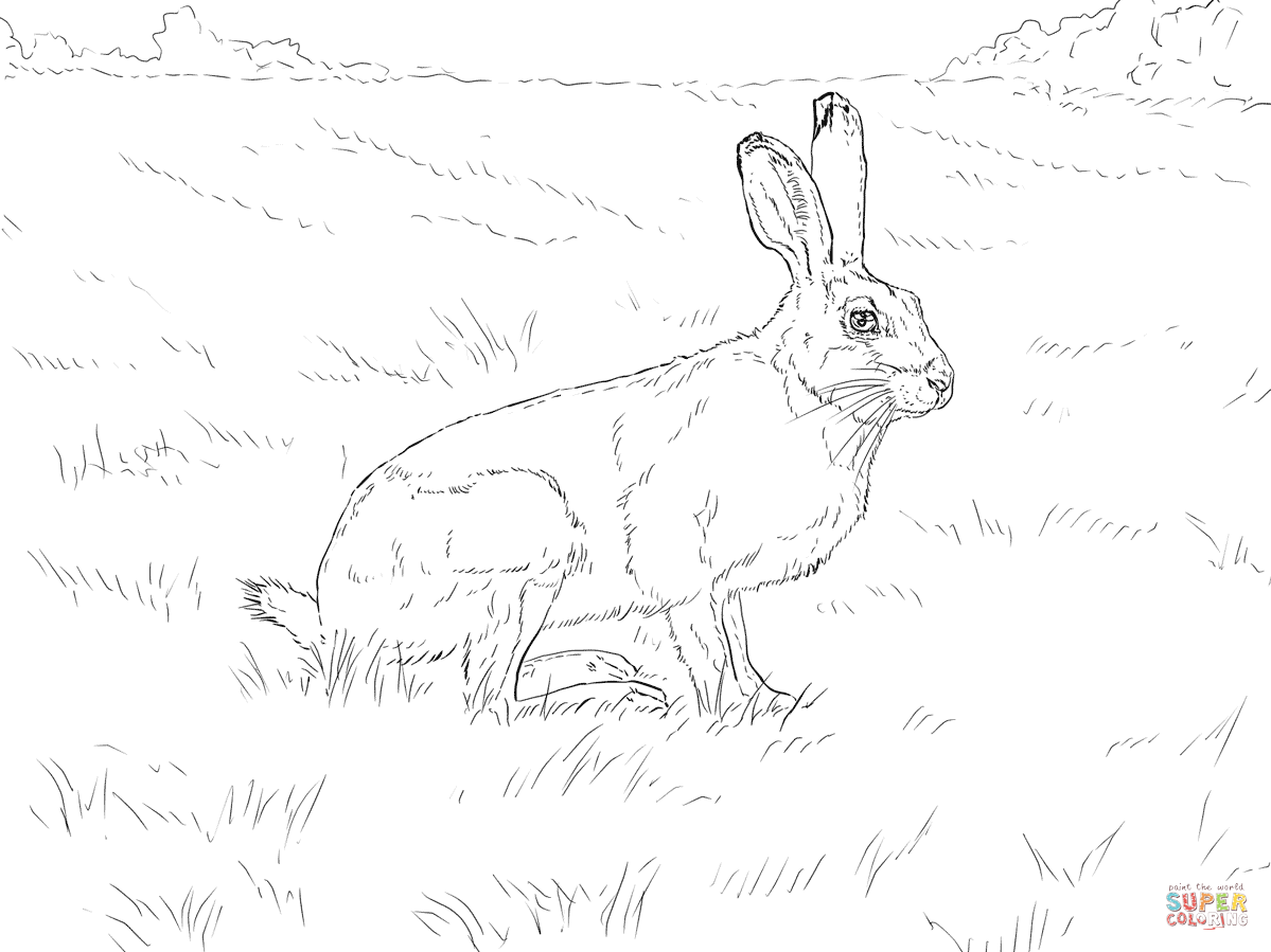 White Tailed Jackrabbit Coloring Page
