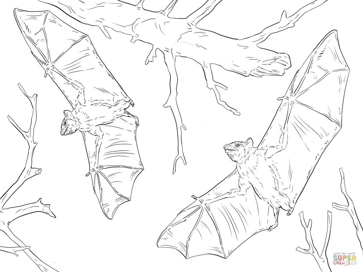 Common Fruit Bats Coloring Page
