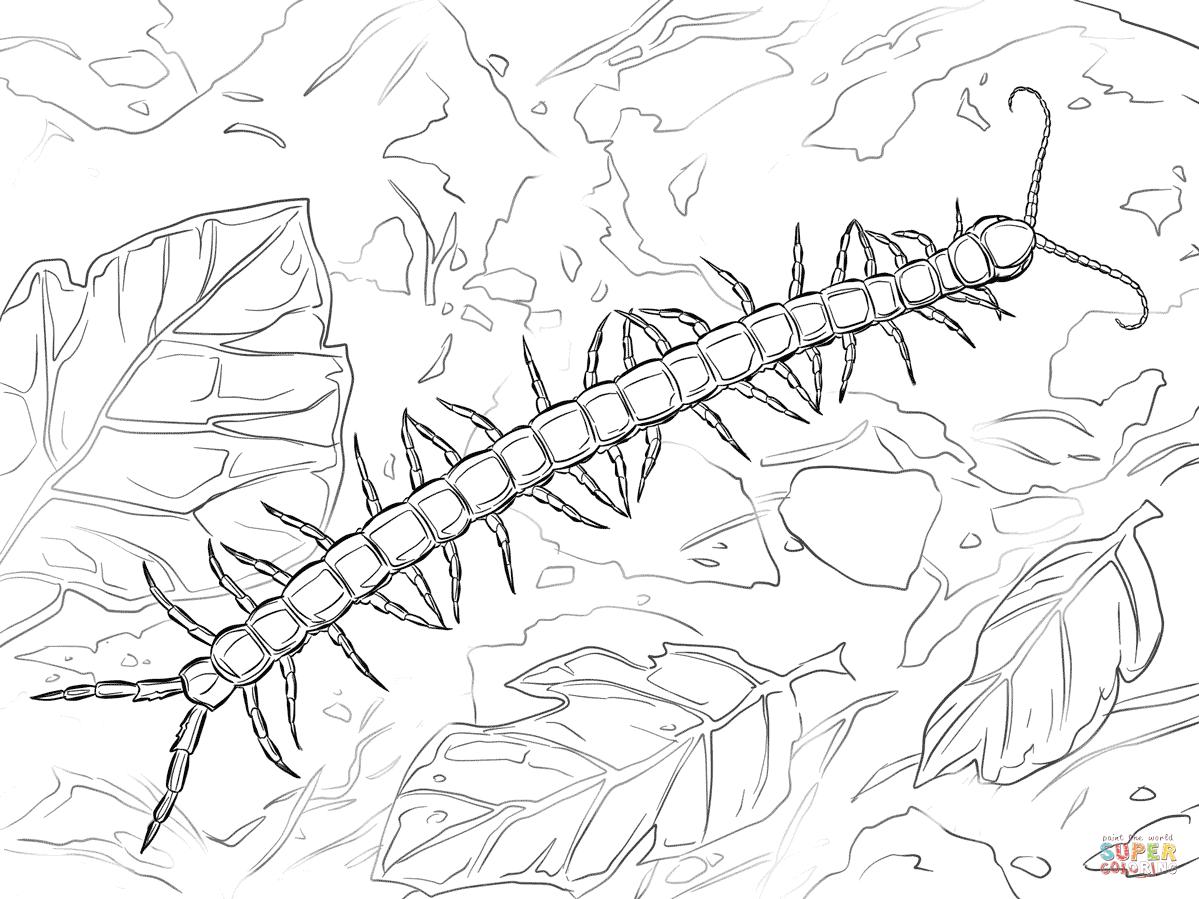 Ausmalbild Brasilianischer Riesenlaufer