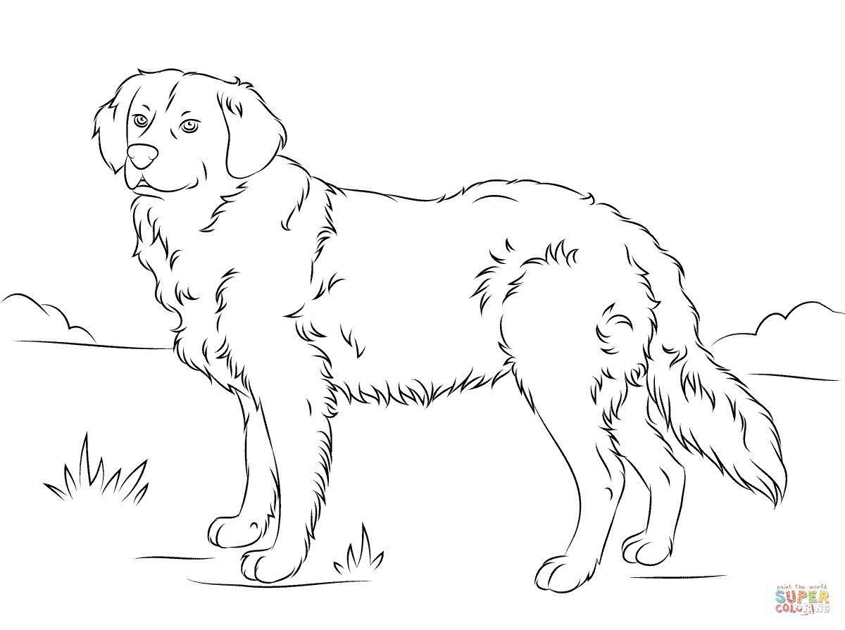 vous aimerez peut être aussi les coloriages de la catégorie chiens
