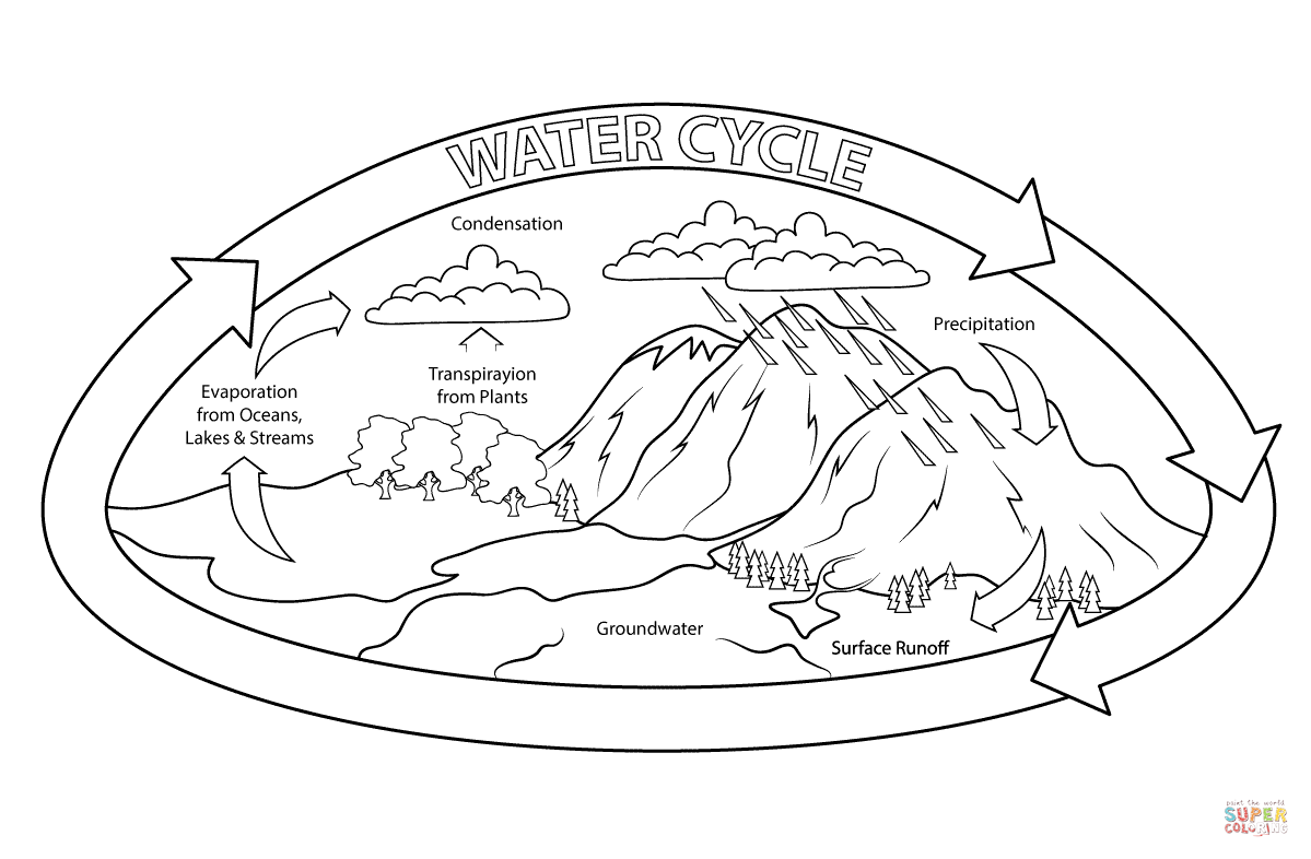 Diagram Of River In The Water Cycle