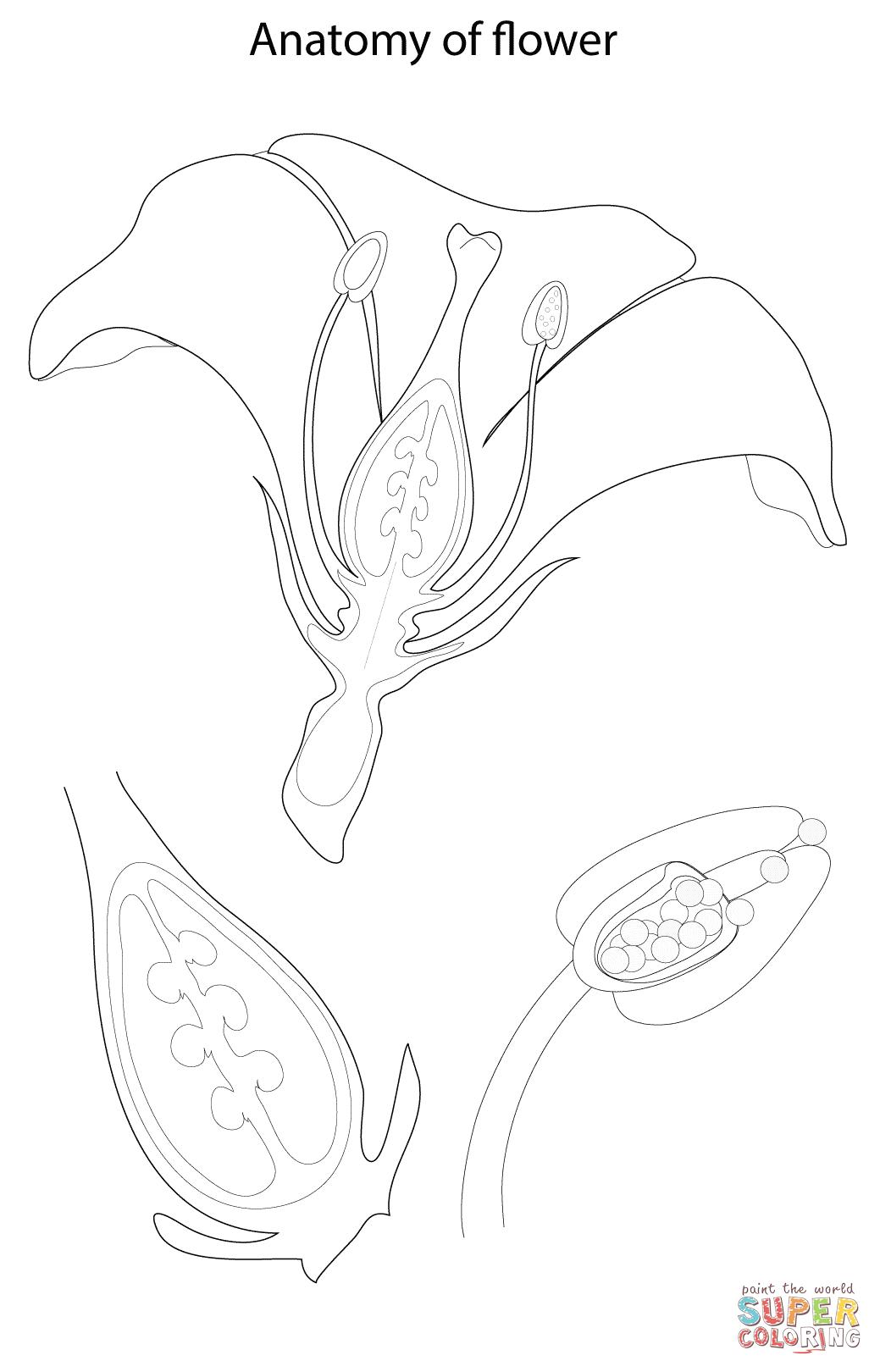 Disegno Di Anatomia Del Fiore Da Colorare