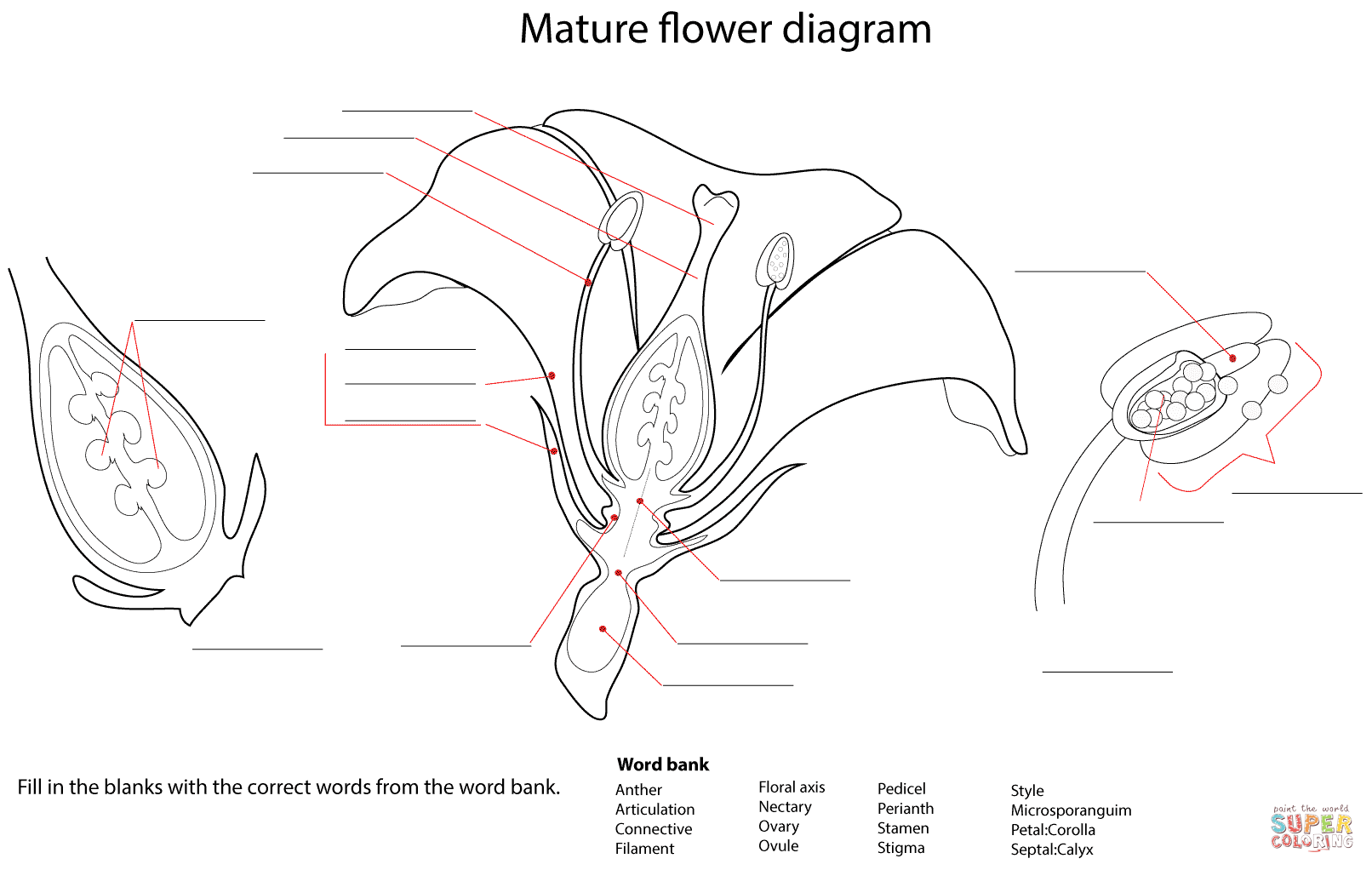 Flower Diagram Worksheet Coloring Page