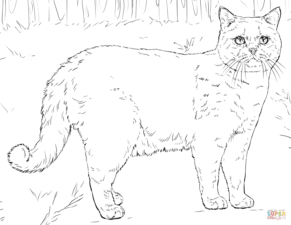 British Shorthair Cat Coloring Page