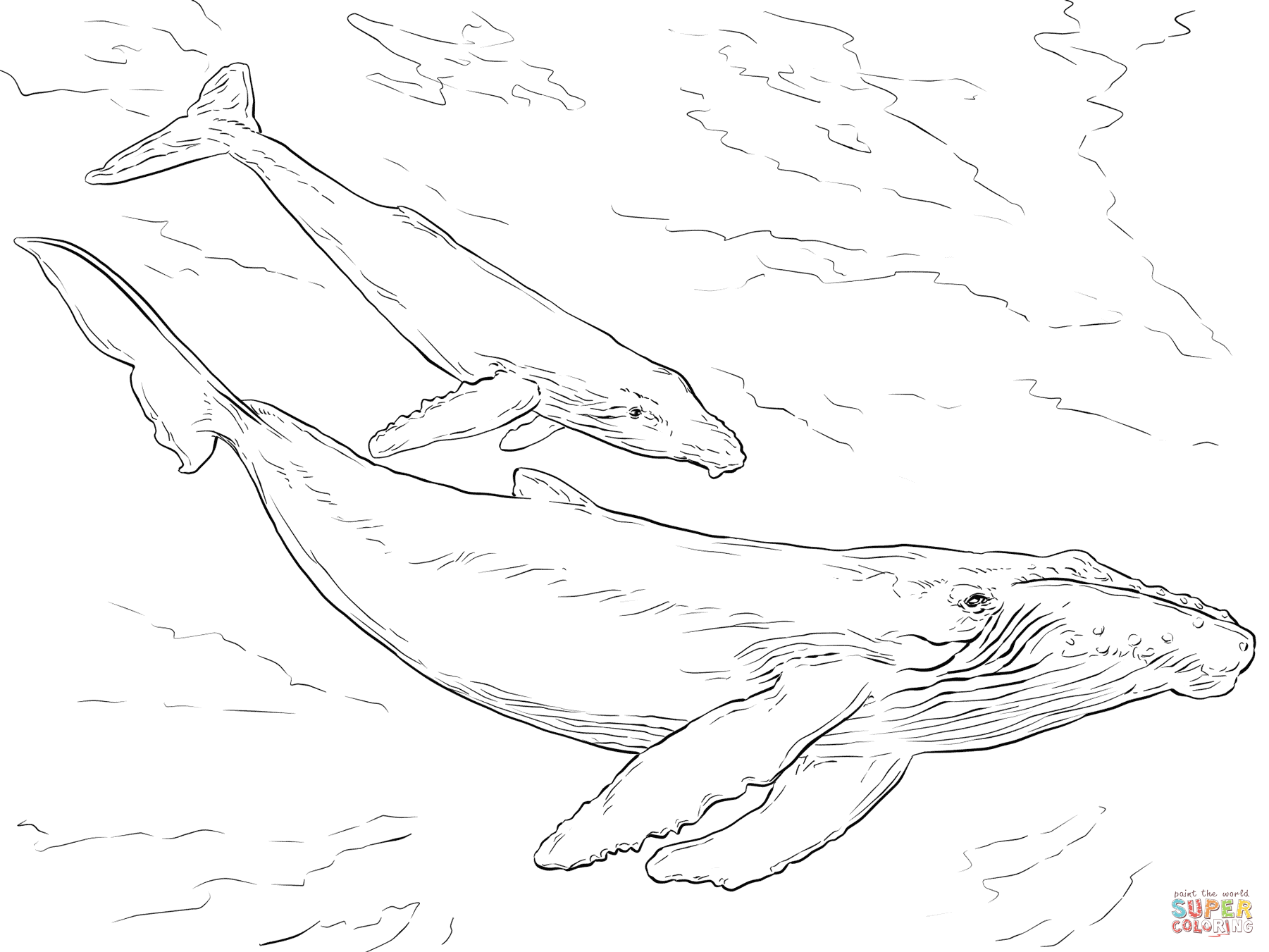 blue humpback whale coloring page humpback whale line drawing click