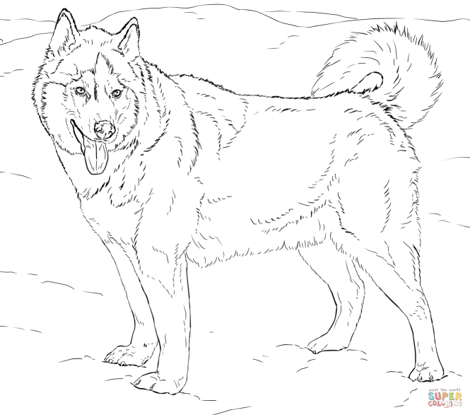 Click The Alaskan Husky Coloring Pages