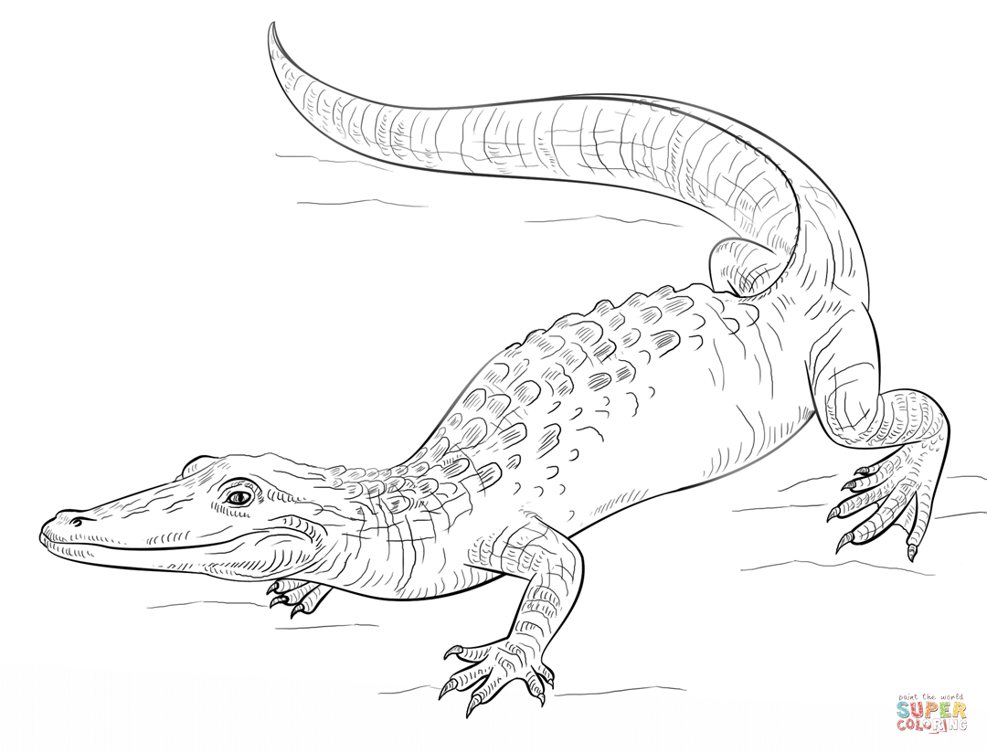 Realistic Alligator Coloring Page