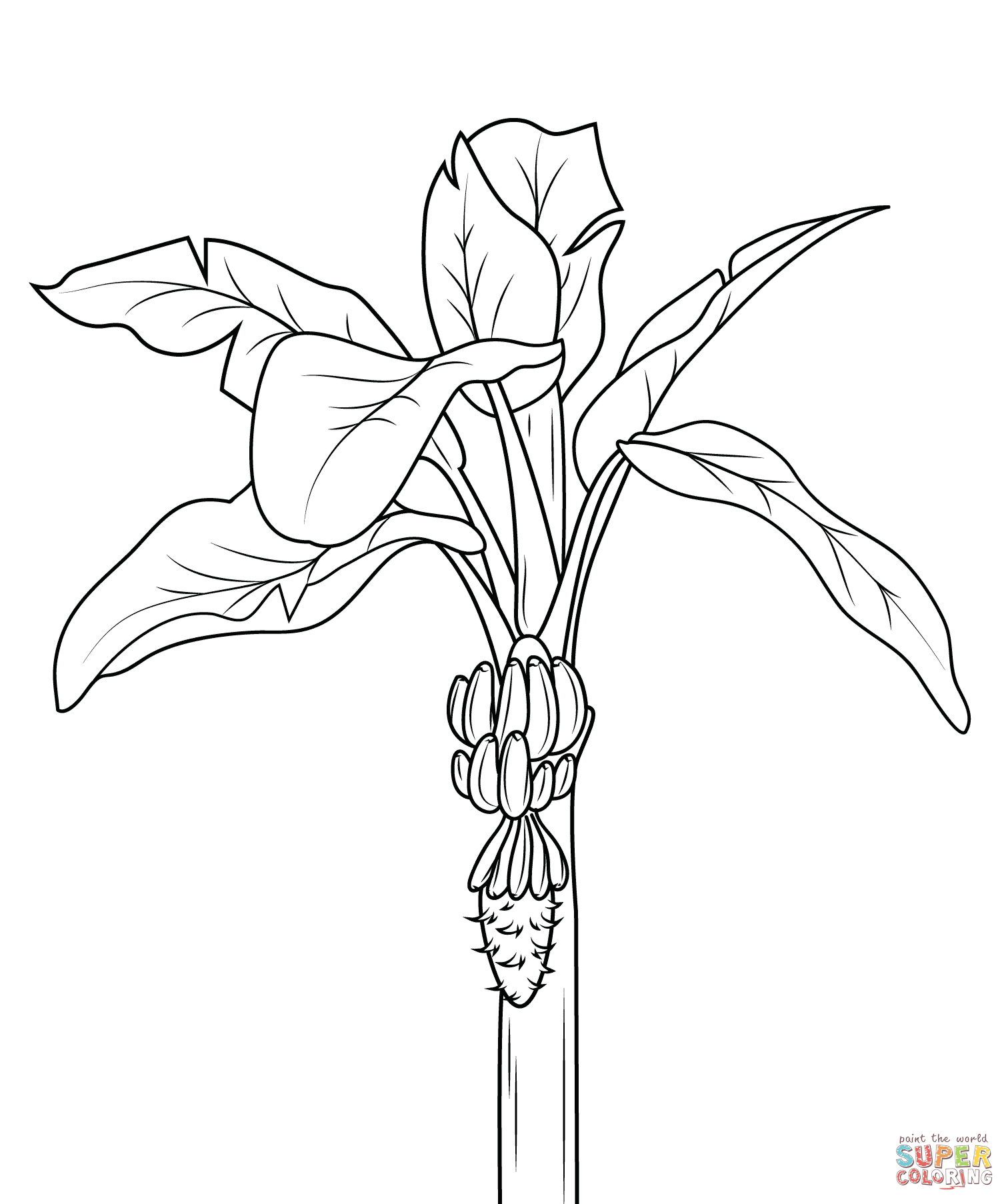 banana tree coloring pages for kids bananas coloring pages free