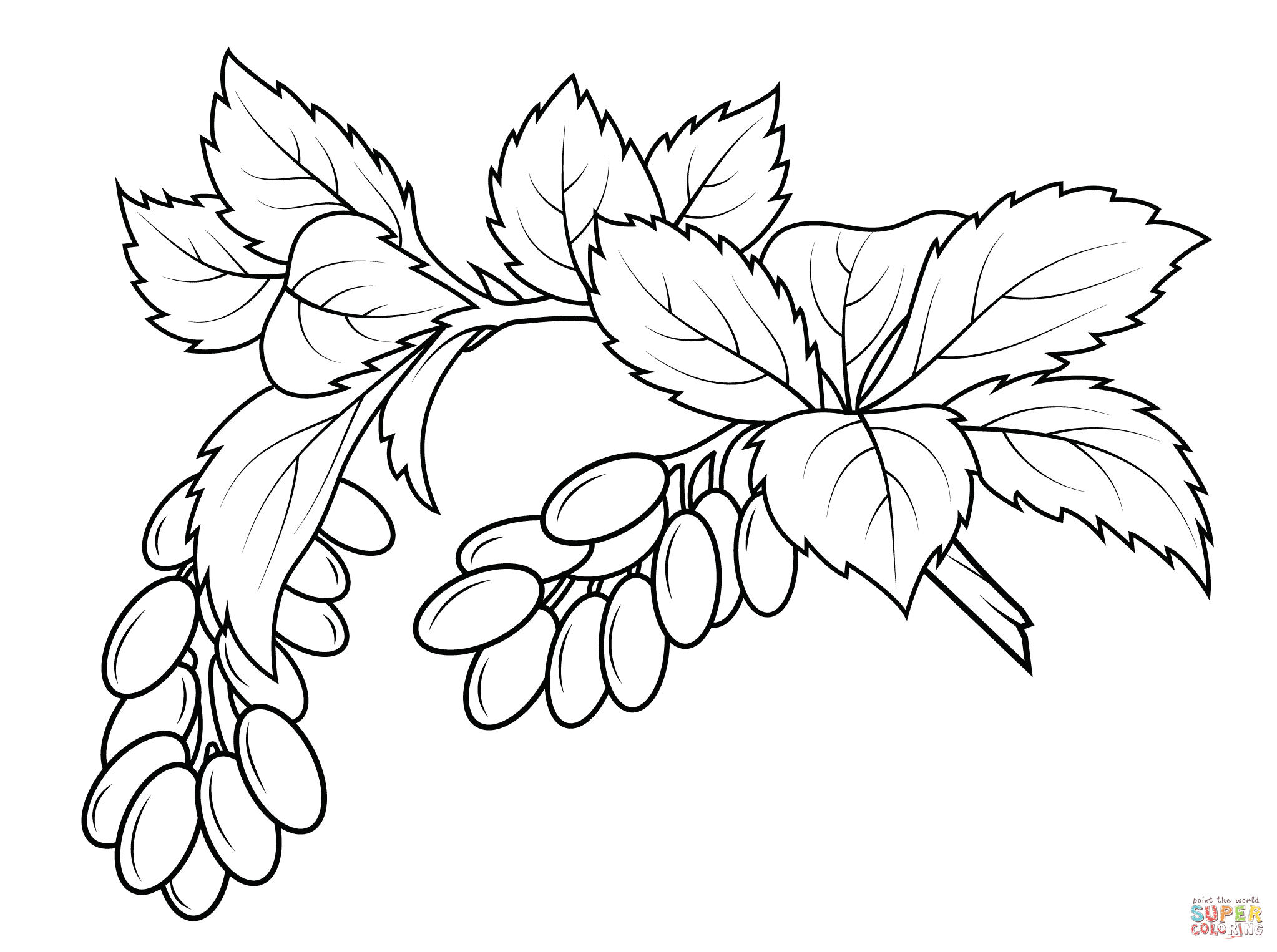 Jamaican Ackee Fruit Drawing Sketch Coloring Page