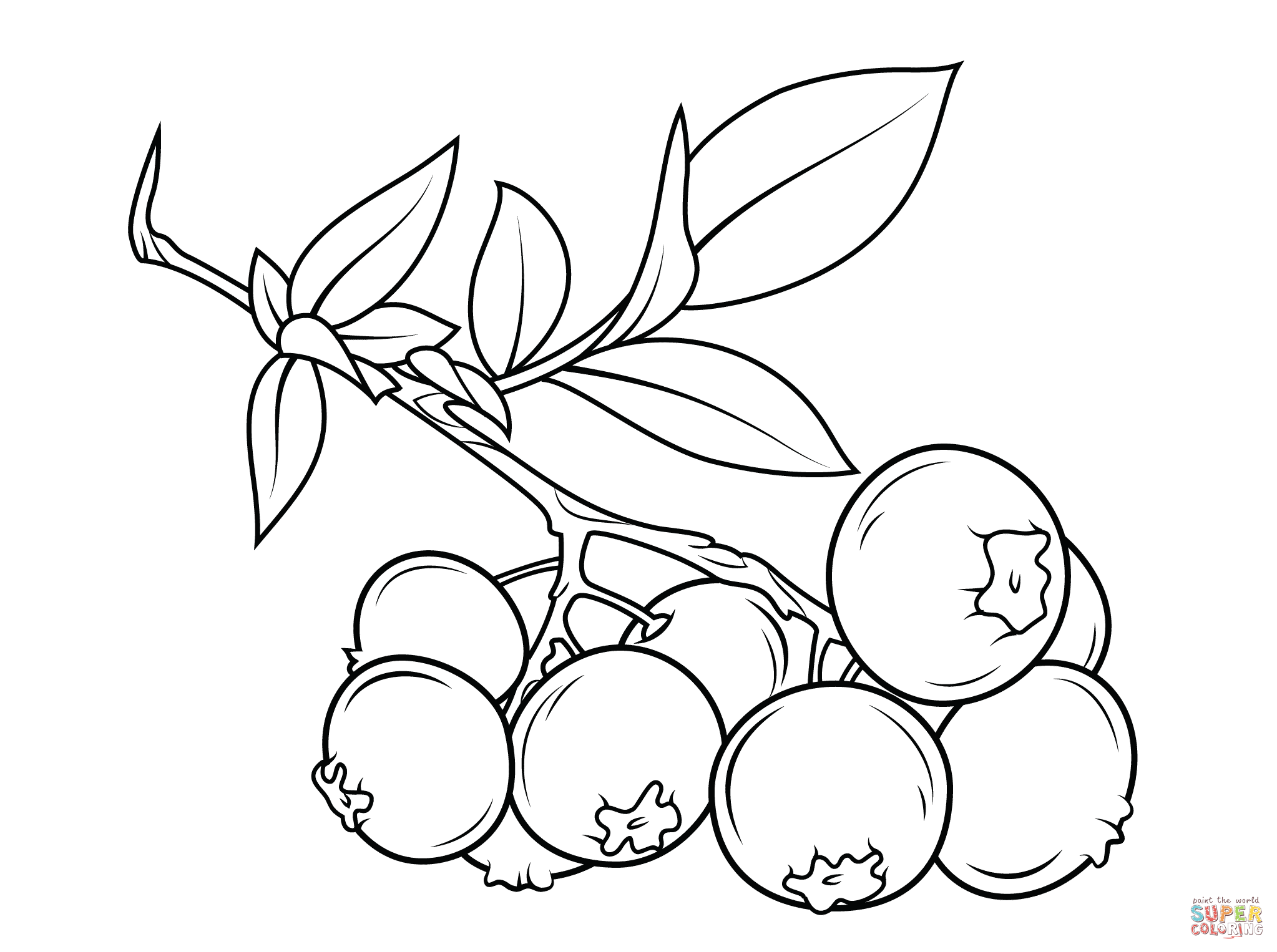 blueberry branch coloring page free printab