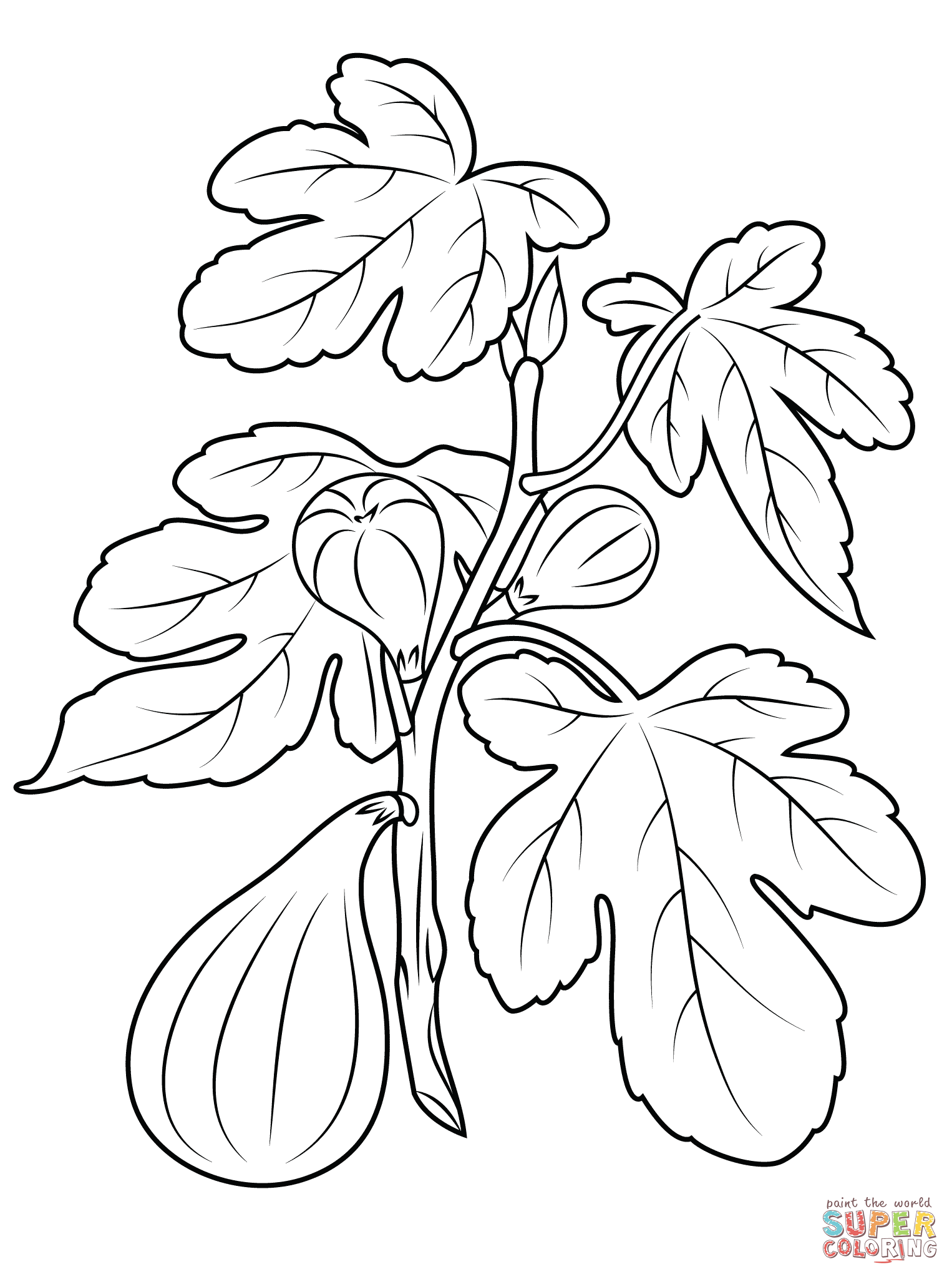 Fig Plant Coloring Page