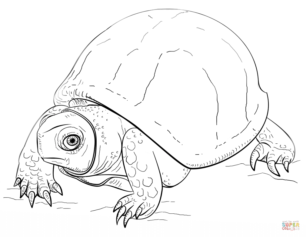 ornate box turtle coloring page
