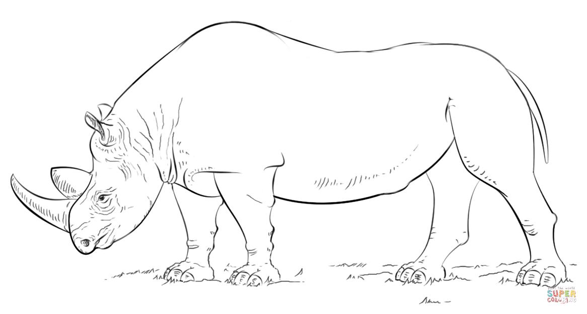 rhinoceros coloring page