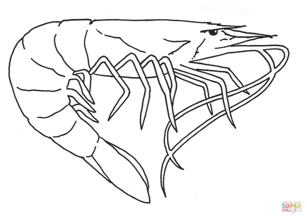 Mantis Shrimp Coloring Page Coloring Coloring Pages
