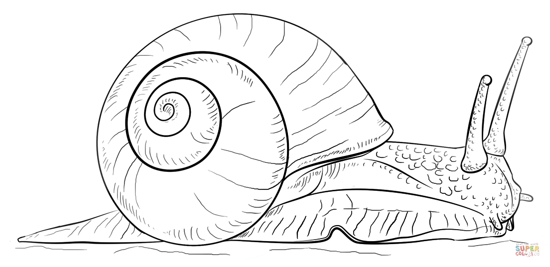 land snail coloring page free printable coloring pages
