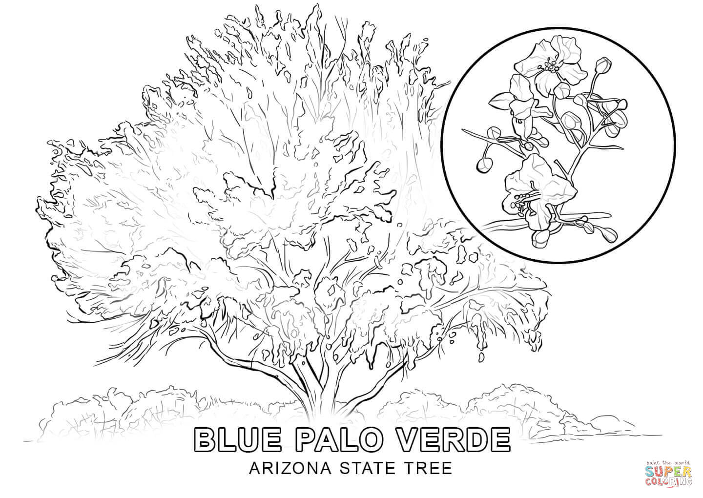 Arizona State Tree Coloring Page