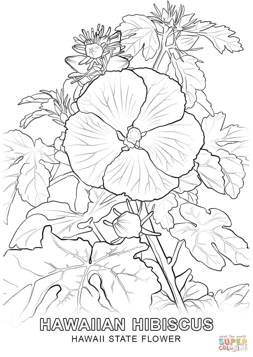 amazing large flower coloring pages download flowering coloring