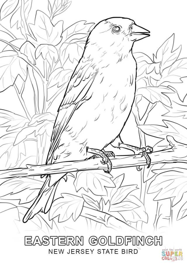 New Jersey State Bird coloring page  Free Printable Coloring Pages