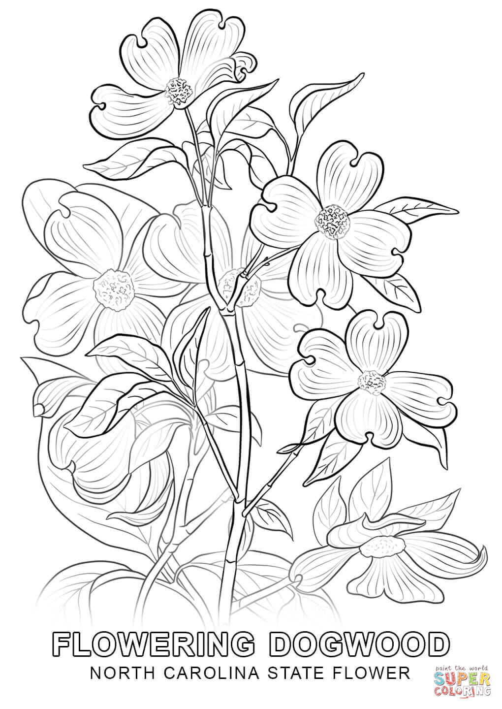 north carolina state flower coloring page free printable