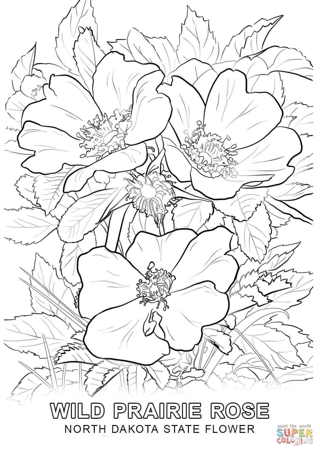 coloring page book coloring book for adults 008 flowering coloring