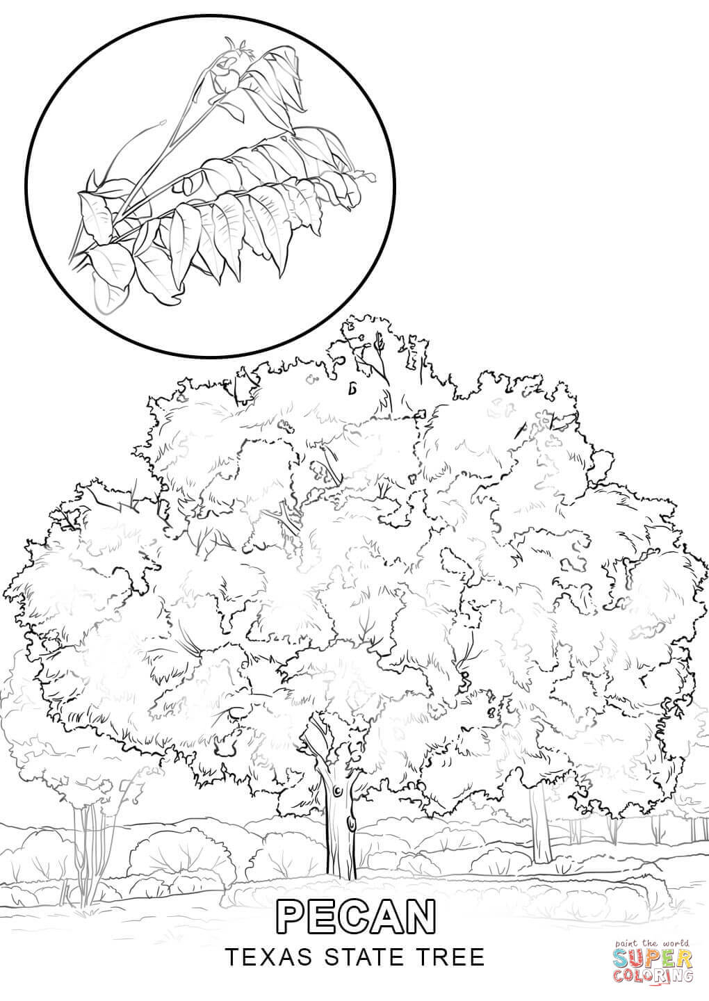Florida state tree coloring page coloring pages for University of texas coloring pages