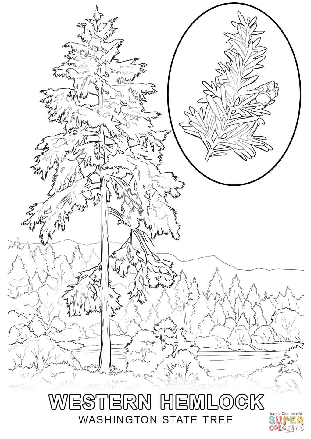 free coloring pages download washington state tree coloring page free printable coloring pages of pine