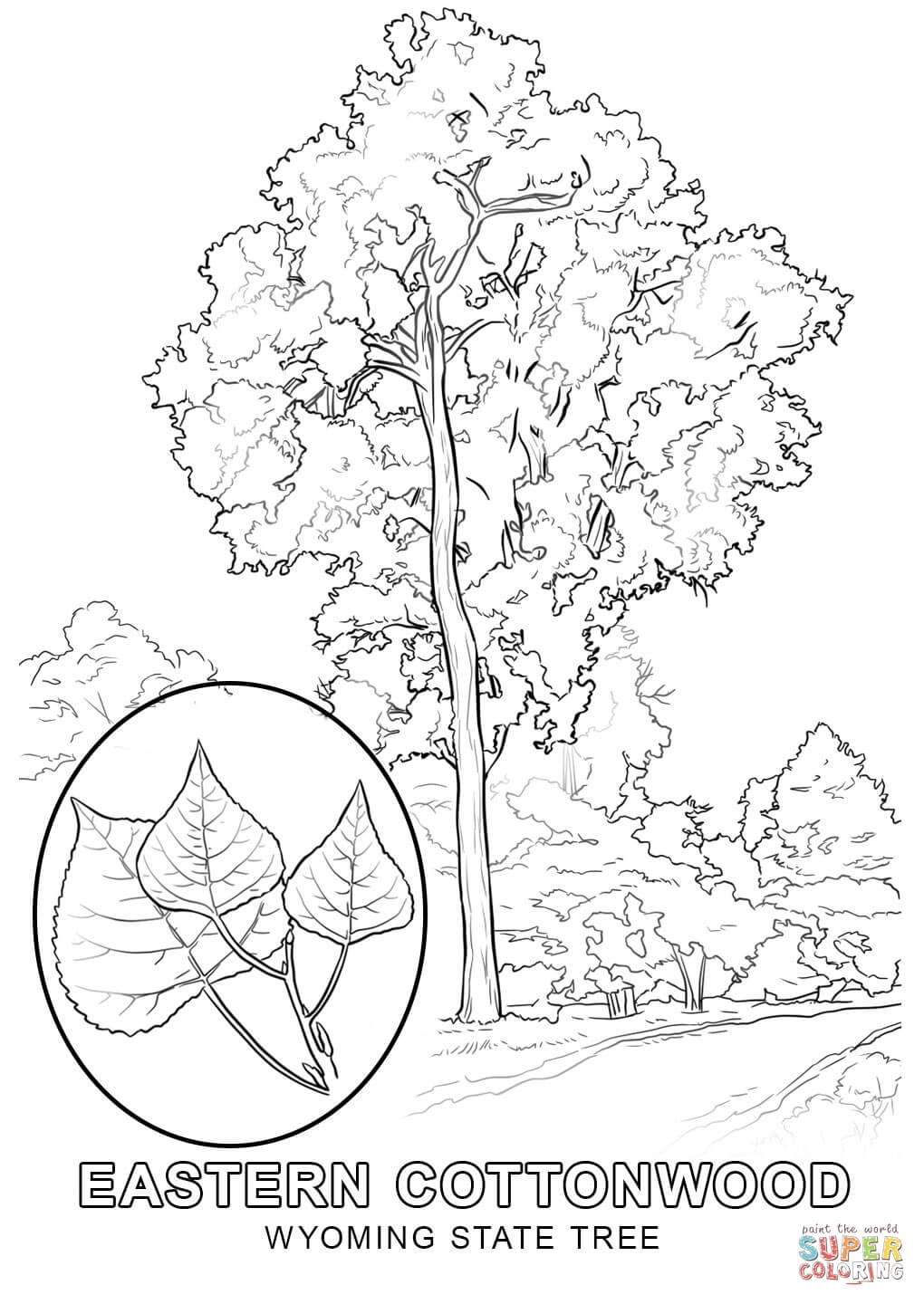 state tree coloring pages - florida state tree coloring page coloring pages