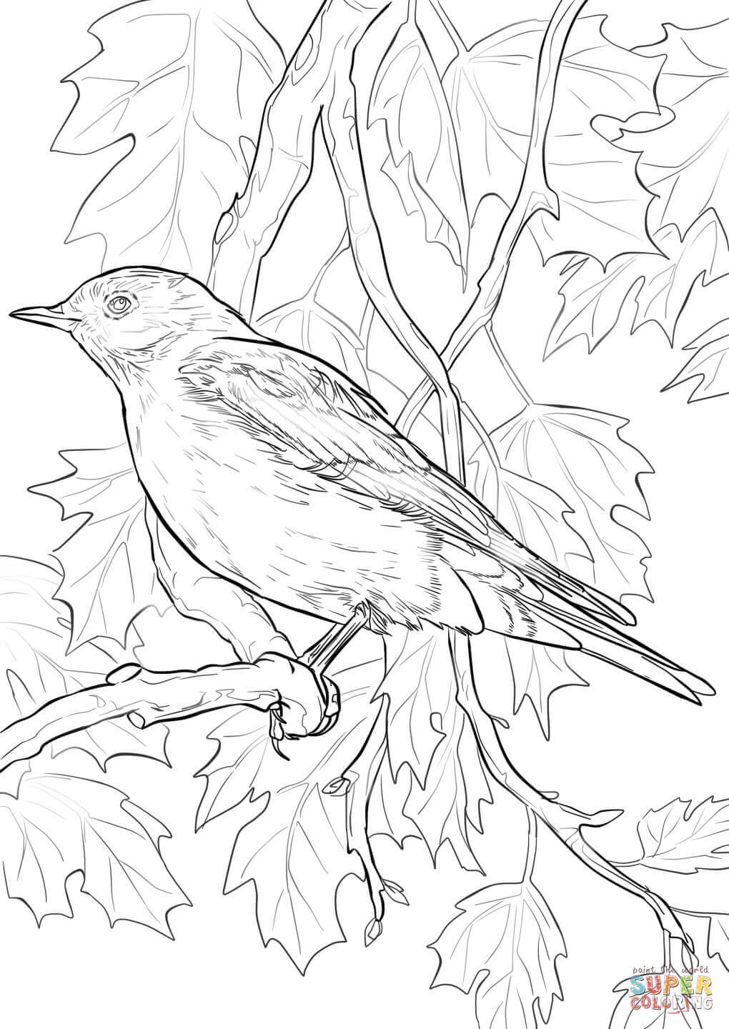 mountain bluebird coloring page free printable coloring pages