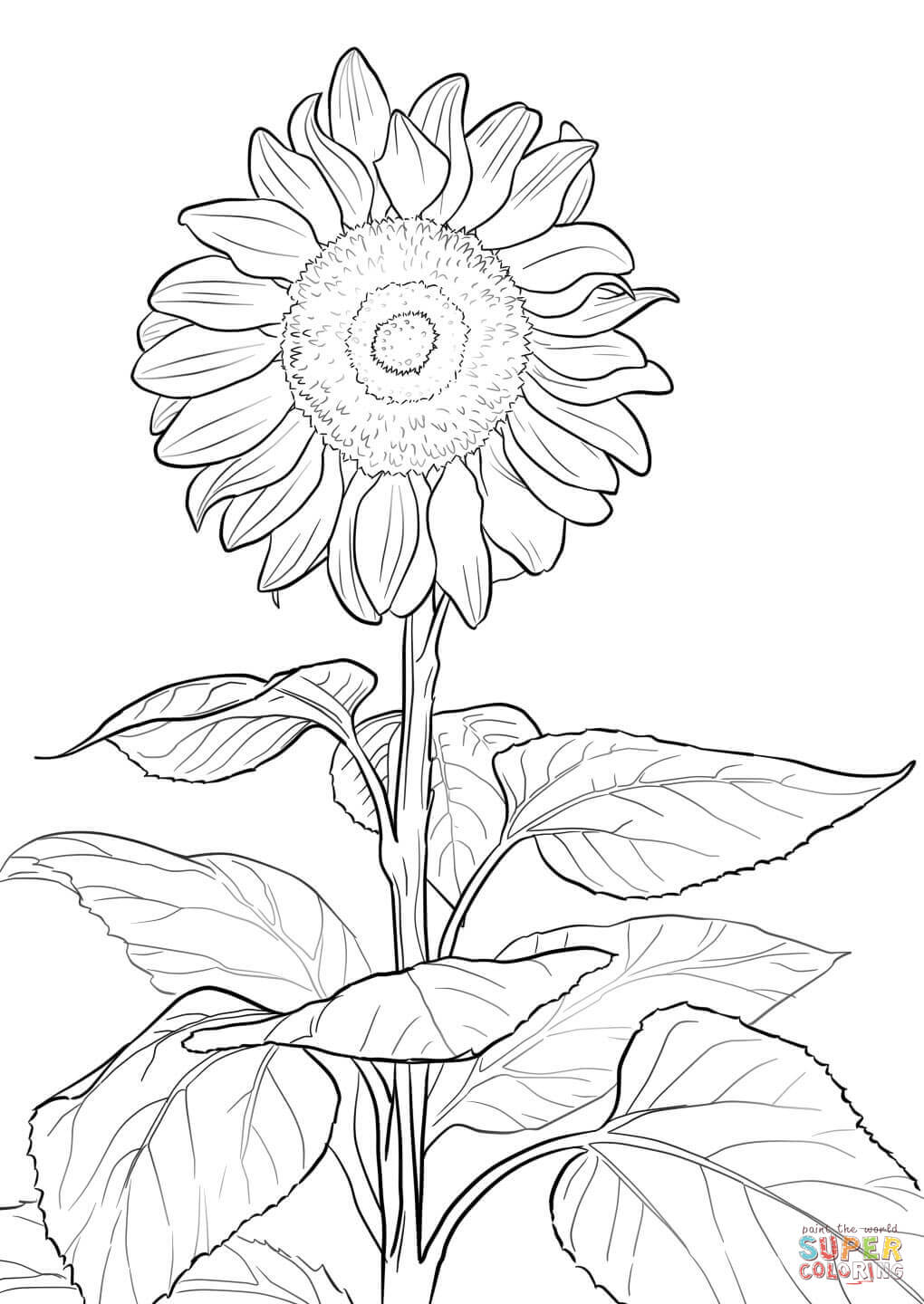 adults autumn coloring sheets fall coloring as well sunflower coloring
