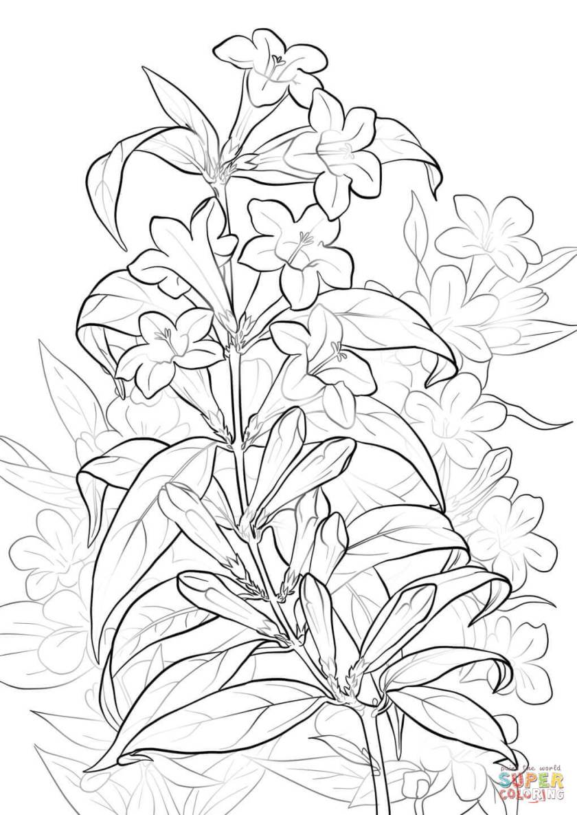 yellow jessamine coloring page  free printable coloring pages