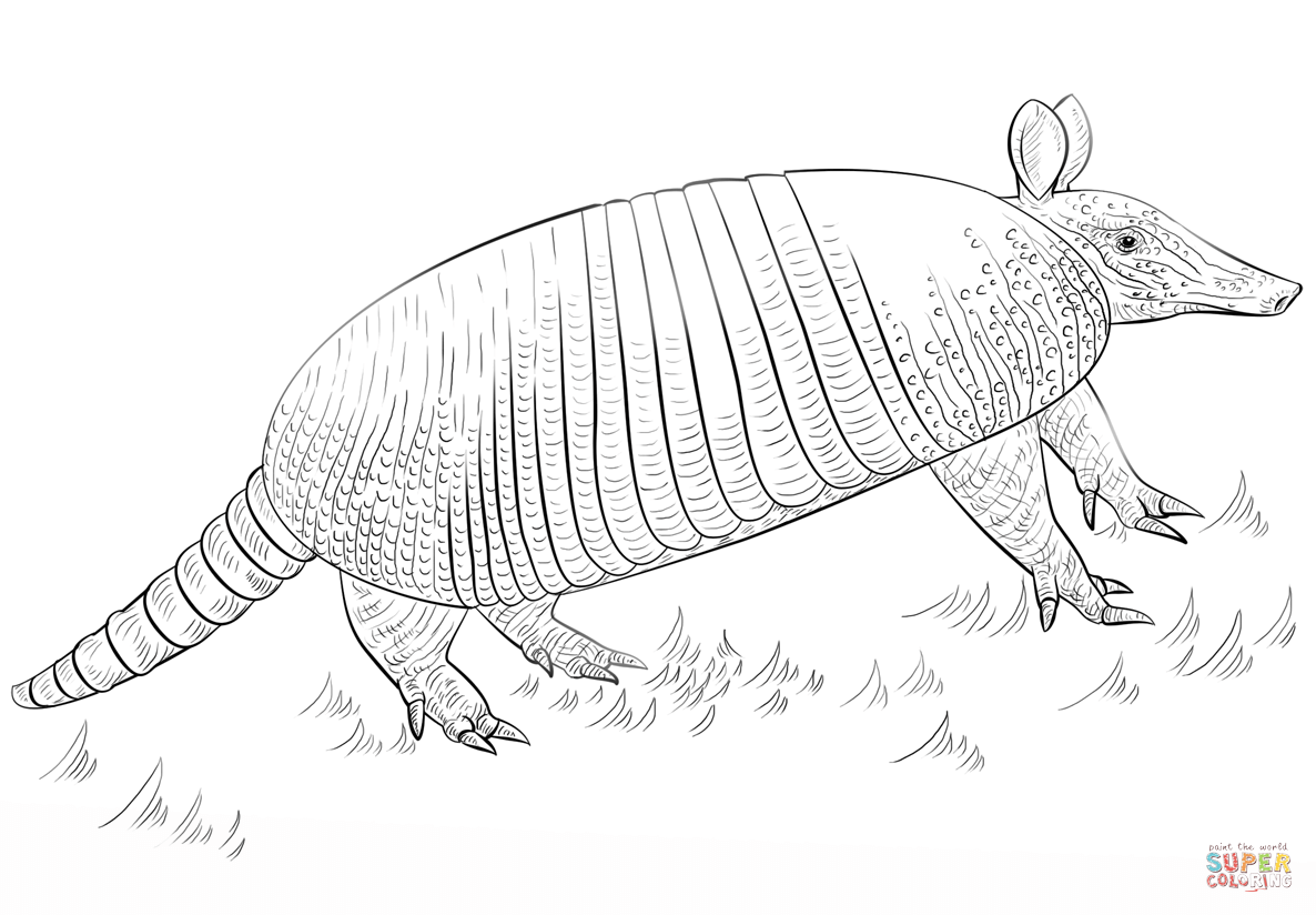 Armadillo Coloring Pages Free Coloring Pages Download | Xsibe texas ...