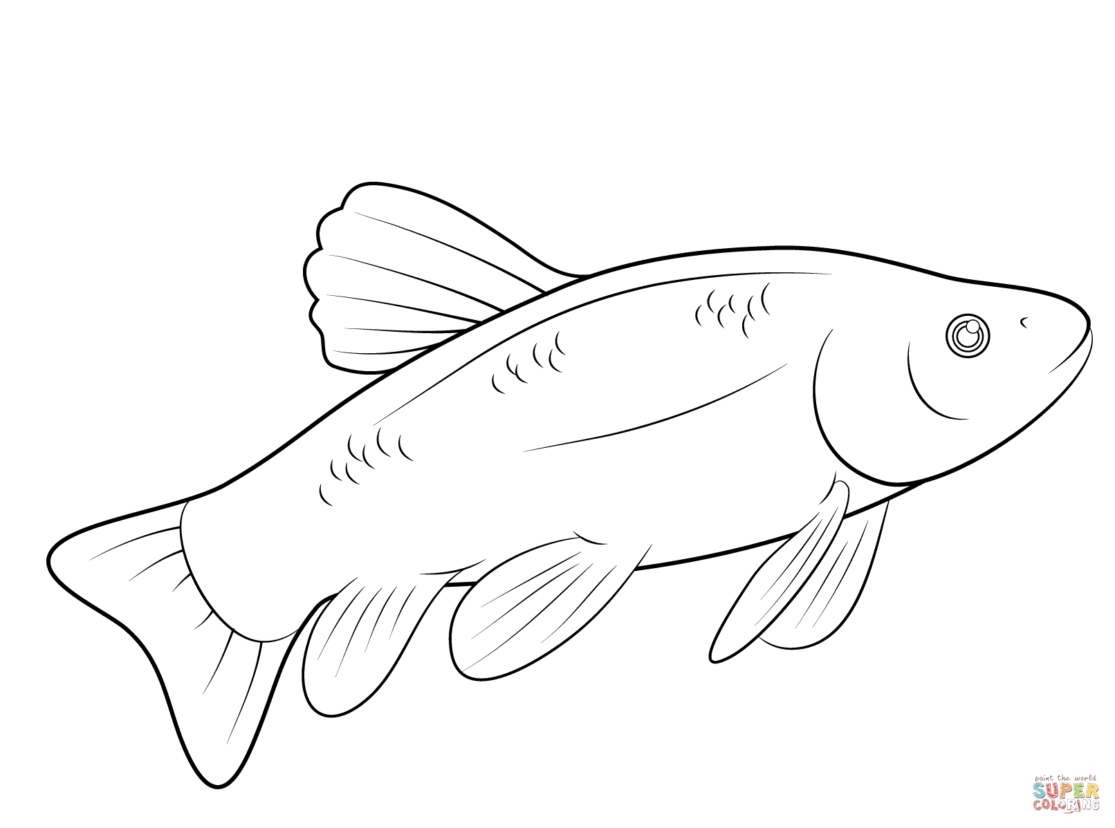 Fish Coloring Page Free Printable Coloring Pages