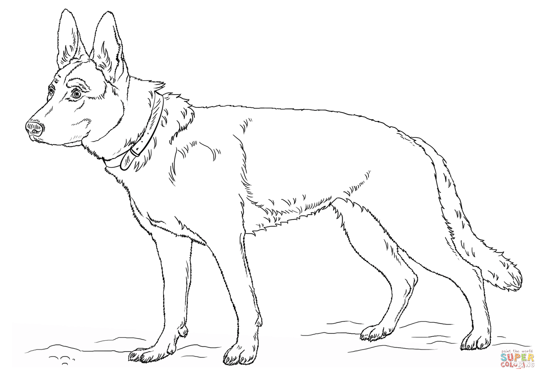 Ausmalbild Deutscher Schaferhund
