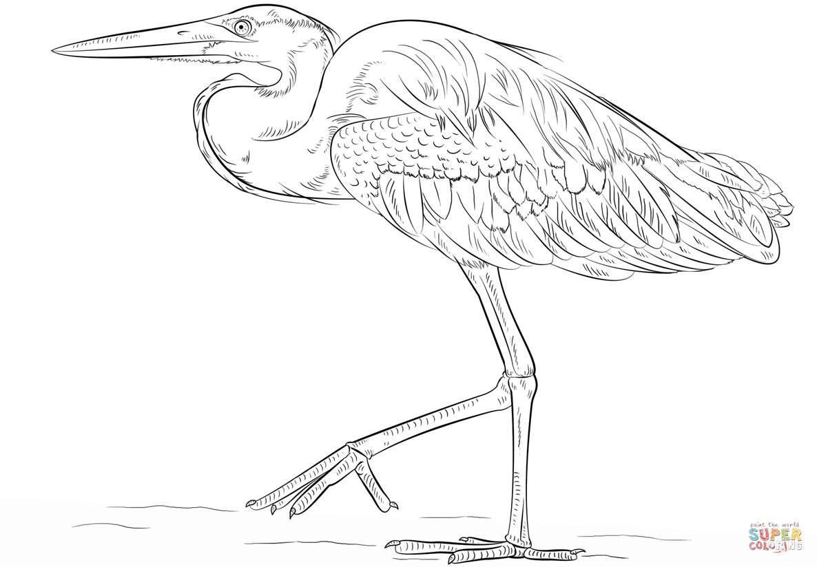 Great Blue Heron Coloring Page