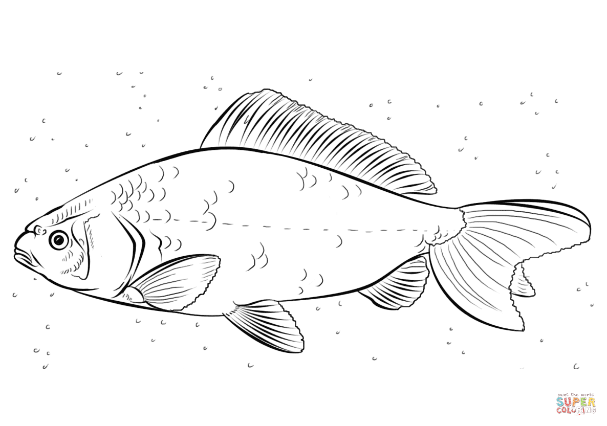 Koi Carp Coloring Page Free Printable Coloring Pages