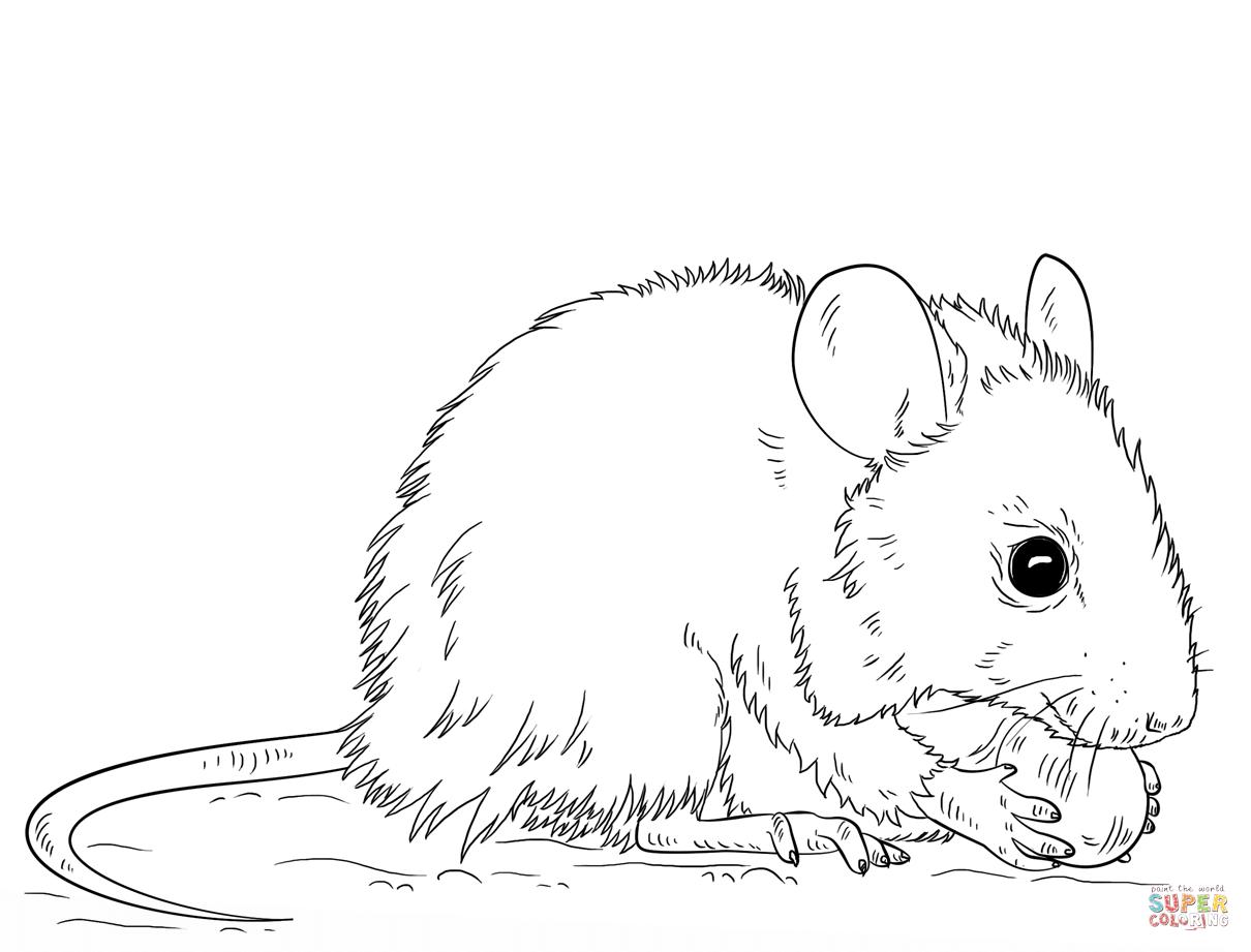 Ausmalbild Maus