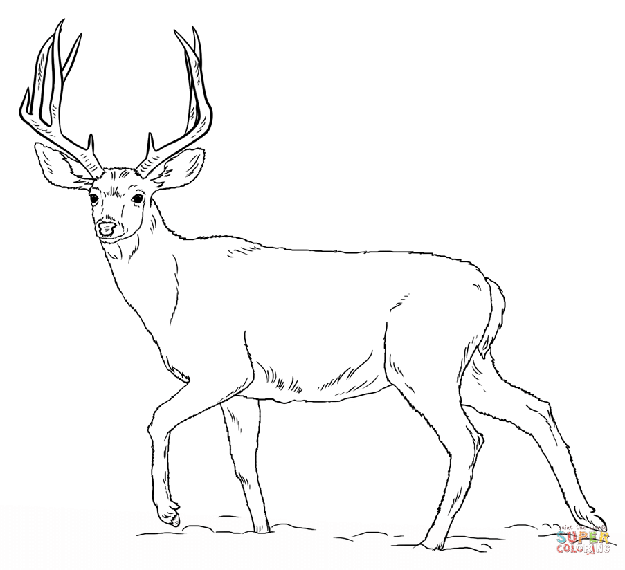 browning buck coloring pages coloring pages browning deer logo love