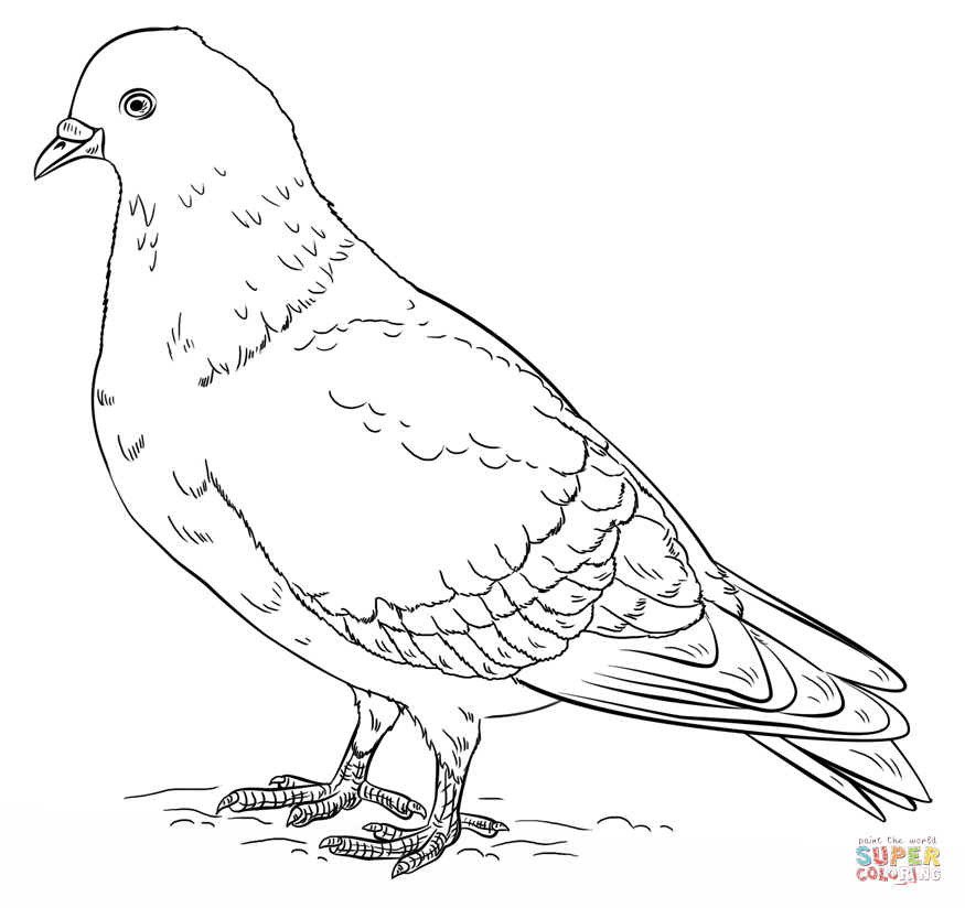 pigeons coloring pages free coloring pages