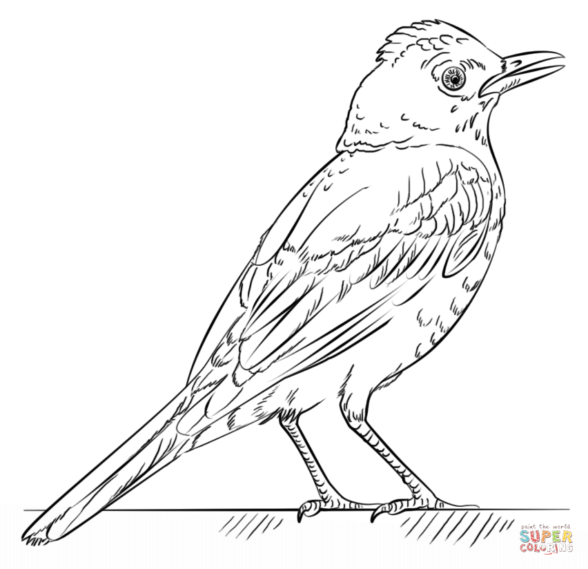 red robin coloring page free printable coloring pages