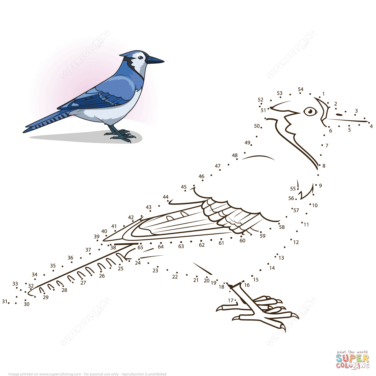 Blue Jay Dot To Dot