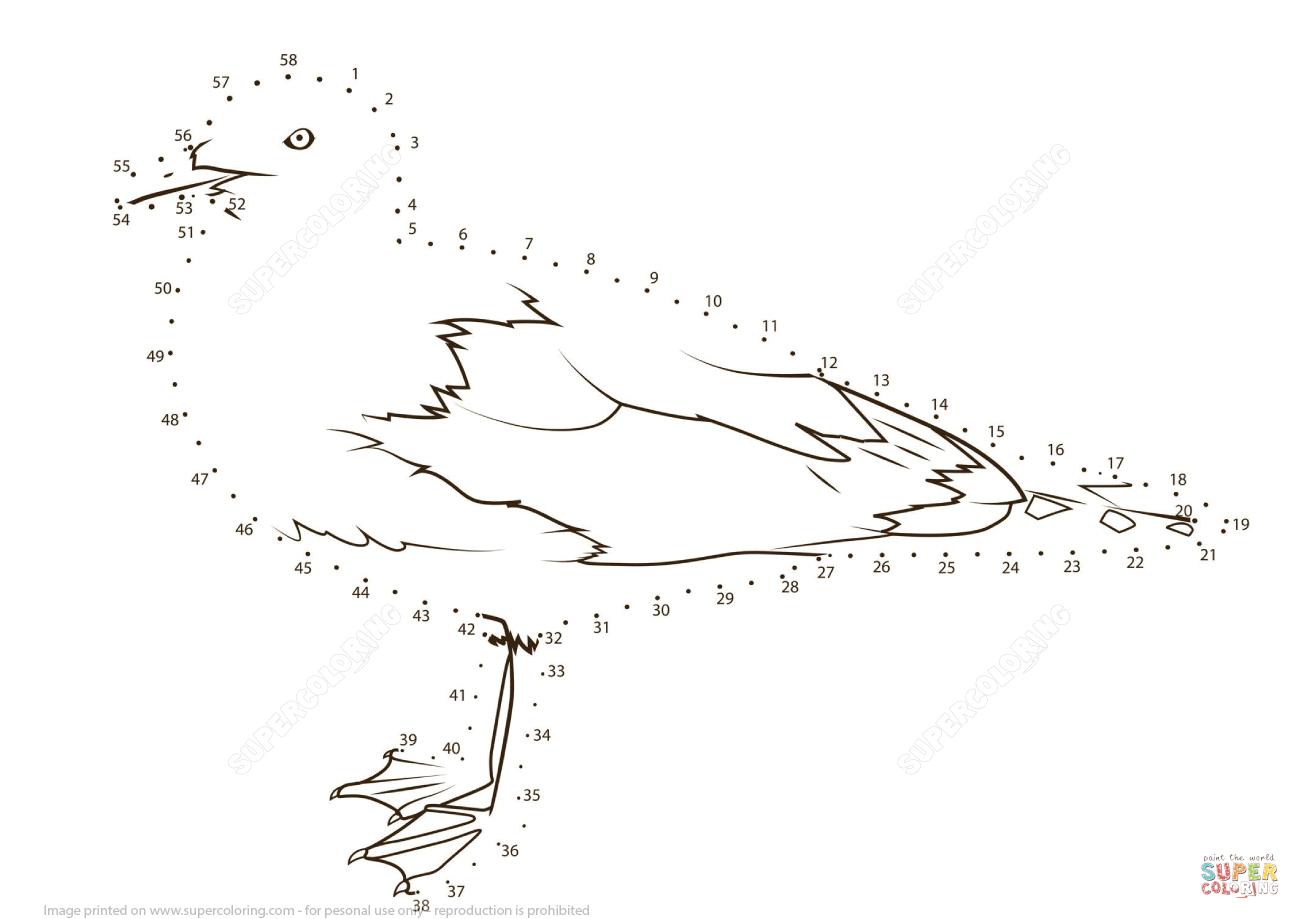 Seagull Dot To Dot