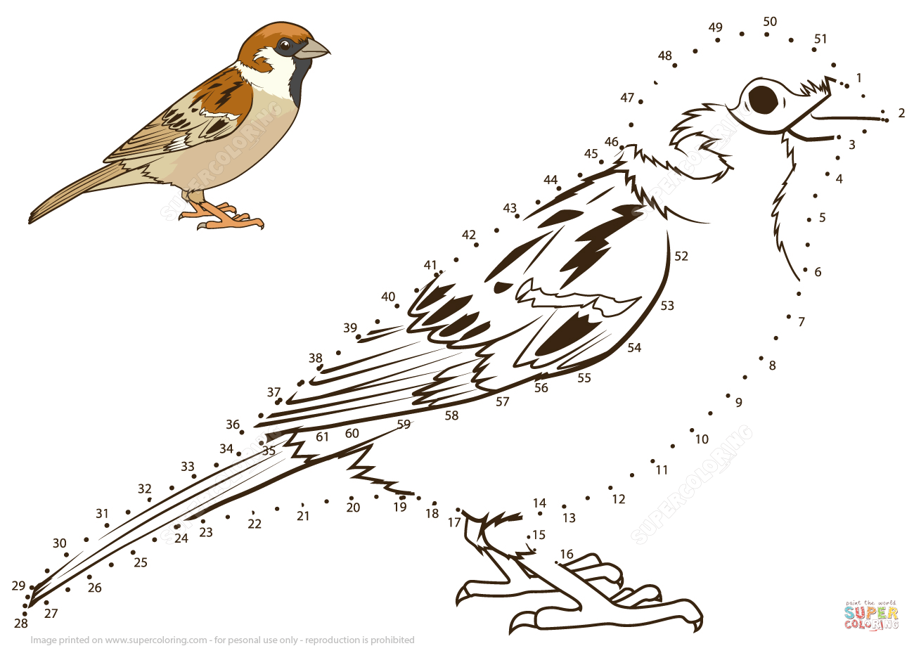 Sparrow Dot To Dot