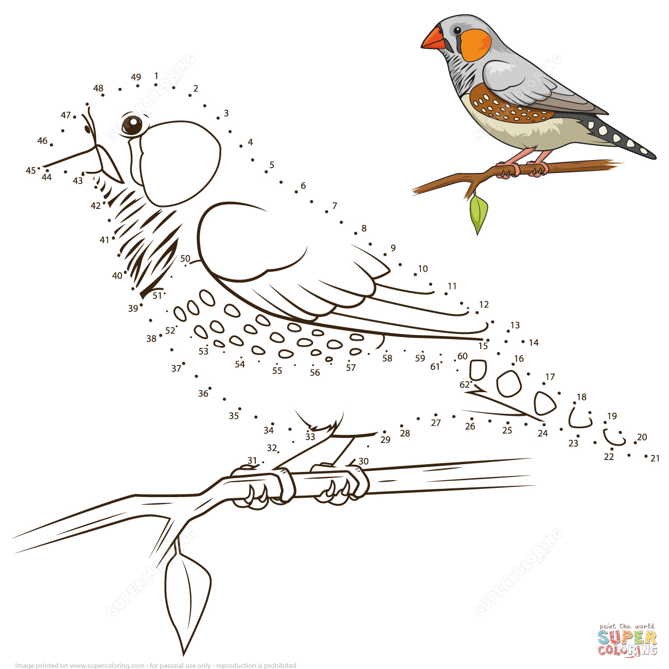 Zebra Finch Bird Dot To Dot