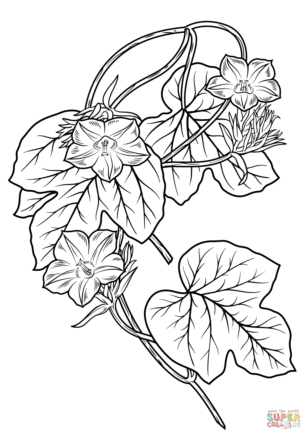 Morning Glory Flower Coloring Page