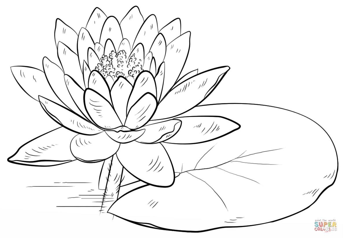 Water Lily And Pad Coloring Page